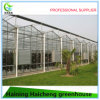 Venlo Glass Hydroponic Greenhouse for Agriculture
