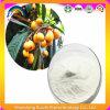 Loquat Leaf Extract Ursolic Acid 98%