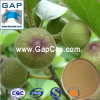 Manufacturers Supply Fig Plant Extract