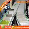 Best Recommended Food Grade Modular Belt Conveyor with High Quality