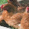 Hexagonal Wire Netting Used for Poultry Cage