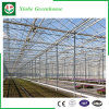 Glass/Hollow Tempered Glass Greenhouse with Ventilation System