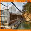 High Quality F-Clean Multi-Span Film Greenhouse with Glass Wall