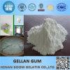 Low Acyl Gellan Gum Promotional Halal Gum Gellan