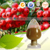 Pure Natural Hawthorne Berry Extract Hawthorn Fruit P. E.