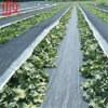 Plastic Woven Geotextile for Weed Control
