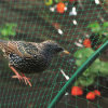 Fashionable Hot Sale Anti Bird Netting Nylon Knotted Net
