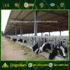 ISO Prefabricated Light Steel Low Cost Cow Farm