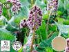 Butterbur Rhizome Extract: Petasins 7.5%, Petasins and ISO-Petasins 15% 25%, 30: 1