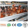 High Quality a Type Layer Chicken Cages