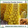 Natural Health Care Cistanche Powder Extract with Echinacoside 30%/Acteoside 10%