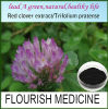 100% Natural Red Clover Extract (XT-FL172)