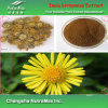 100% Natural Inula Britannica Extract (10% Chlorogenic Acid)