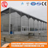 Multi-Span Stainless Steel/ Aluminum Profile Polycarbonate Sheet Greenhouse for Flower