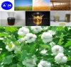 Pure Organic Amino Acids 35% Pure Vegetable Source Amino Acids