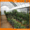 Arch Type Multi-Span Film Greenhouse Flower House China Supplier