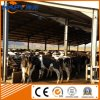 Professional Steel Structure Cattle Shed with Matching Equipment Design