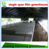 The Cheapest Plastic-Film Greenhouse for Flowers