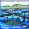 Service Life 15 Years Aquaculture Equipment Floating Pontoon