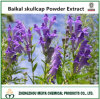 Best Sale Baikal Skullcap Powder Extract with Baicalin 30% -98% HPLC