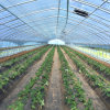 Hot Sale Tunnel Greenhouse with Factory Price