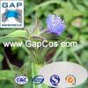 Ecdysterone Cyanotis Arachnoidea Plant Extract