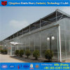 Low Cost China Factory Light Deprivation Venlo PC Greenhouse