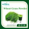 100% Natural Wheat Grass Powder