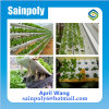 Low Cost Plastic Film Agricultural Hydroponic Greenhouse System