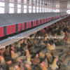 High Quality Poultry Equipment for Layer Chicken