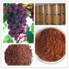 Natural Antioxidant Product Grape Seed P. E. with 98%OPC