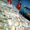 EVOH High Barrier Frozen Food Packaging Film or Bag