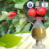 Natural Hawthorn Extract Hawthorn Leaf Powder with FDA Registered