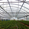 Gothic Multi-Span Poly PC Greenhouse for Sale