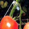 Plant Clip Tomato Clip Vegetable Clip for Greenhouse