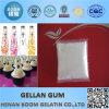 Gellan Gum Low Acyl and High Acyl in Food Additive