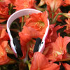 Wireless Headset Fashion Beautiful Stereo Blue Tooth Headphone