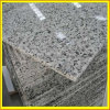 Bala White Granite & Marble Tiles for Wall Flooring (YY -FWT)