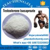 Top Quality Gain Muscle Steroid Powder Testosterone Isocaproate CAS15262-86-9