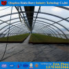 2017 Hot Sale Single Tunnel Greenhouse in Poland for Tomato and Agricultural