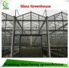 Hot Sales Venlo Multi-Span Glass Green House