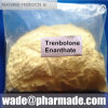 Trenbolone Enanthate Powder Raw Steroids Powder