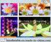 Wedding Supplies, LED Lighting Air Inflatable Flower 001 for Party, Wedding, Stage Decoration
