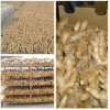 Air-Dried Ginger (100-250g)