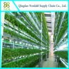 Factory Supply a Hydroponic System