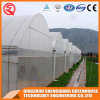 Commercial Multi Span Plastic Film Galvanized Steel Frame Greenhouse