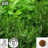 100% Natural High-Temperature Resistance and Strong Anti-Oxidation Rosemary Extract