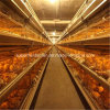 High Quality Poultry Cage Equipment for Chicken Shed