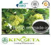Organic Fertilizer or Compost Mass Matter as Plant Food