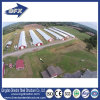 Fast Construction Chicken Use and Open Side Poultry House
